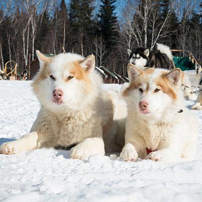 Traineau à chien hiver Pourvoirie Mekoos