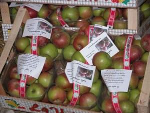 la mela campanina in cestini,il formato più apprezzato