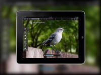 trasferire video e film da iPad a PC o Mac
