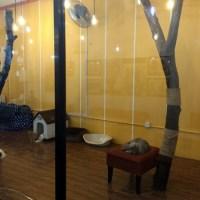cat playroom melaka