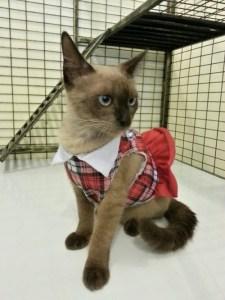 cat care hotel