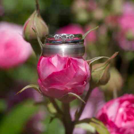 Wedding rings together on top of a rose bud. Kent wedding