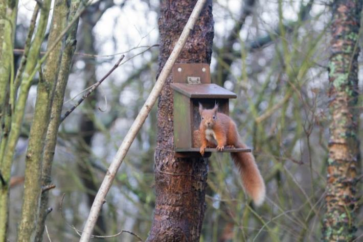 Red Squirrel, Loch Leven, Scottish Travel Blog
