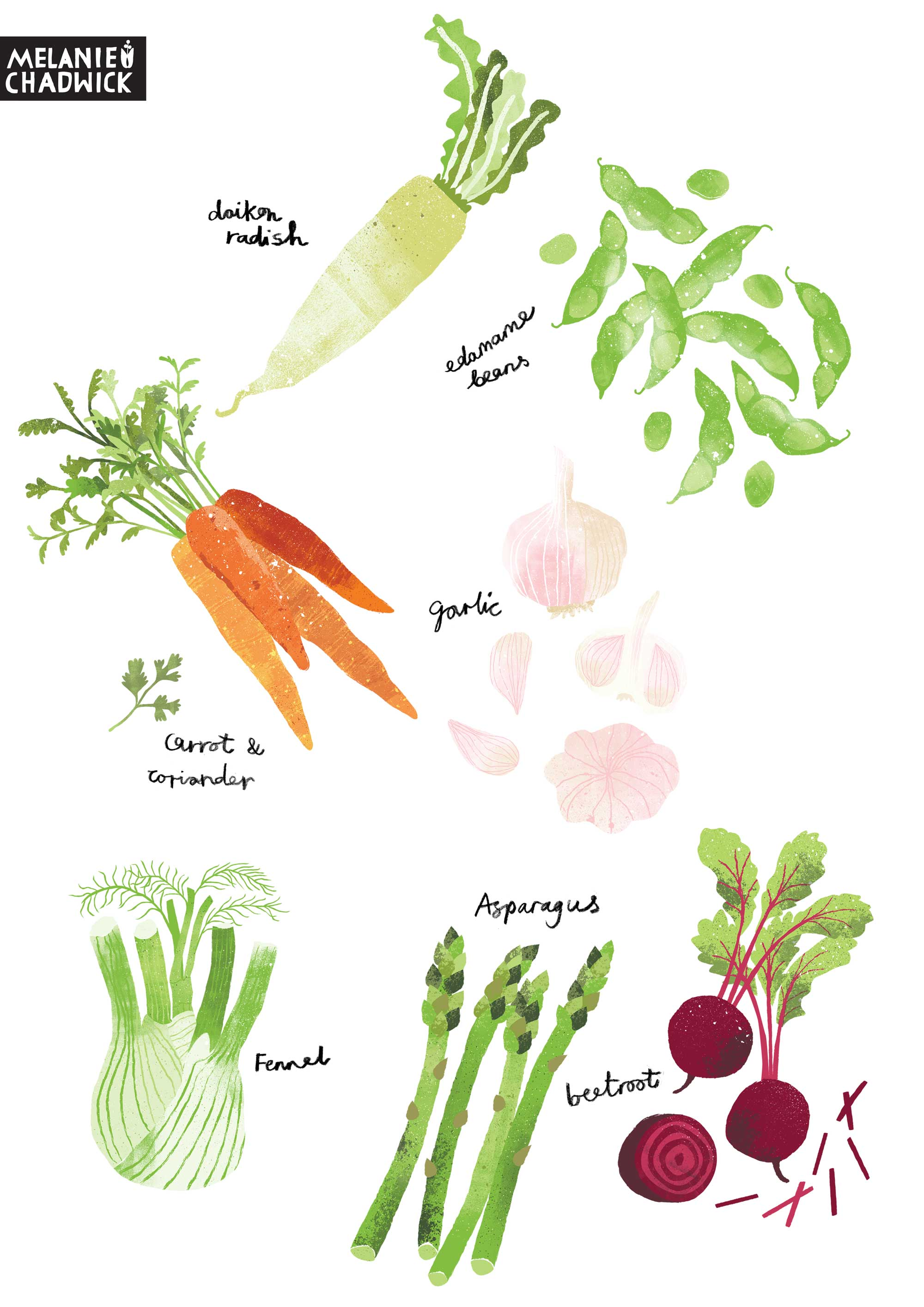 Vegillustration_samples