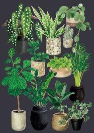 amoureux-des-plantes2-melanie-voituriez