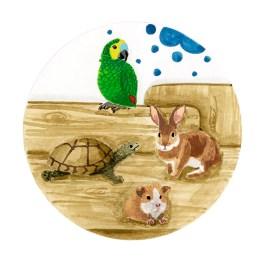 illustration-nac-vetinparis-melanie-voituriez