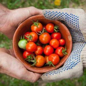 horticulture-vegetable-produce.jpg 3