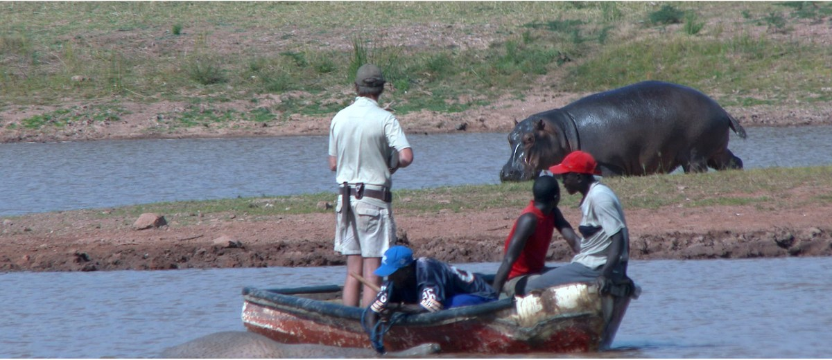 Hunting leopard and hippo in Zimbabwe, a African hunting video by Melcom Van Staden