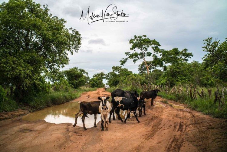 Melcom Van Staden - traffic on the dirt road