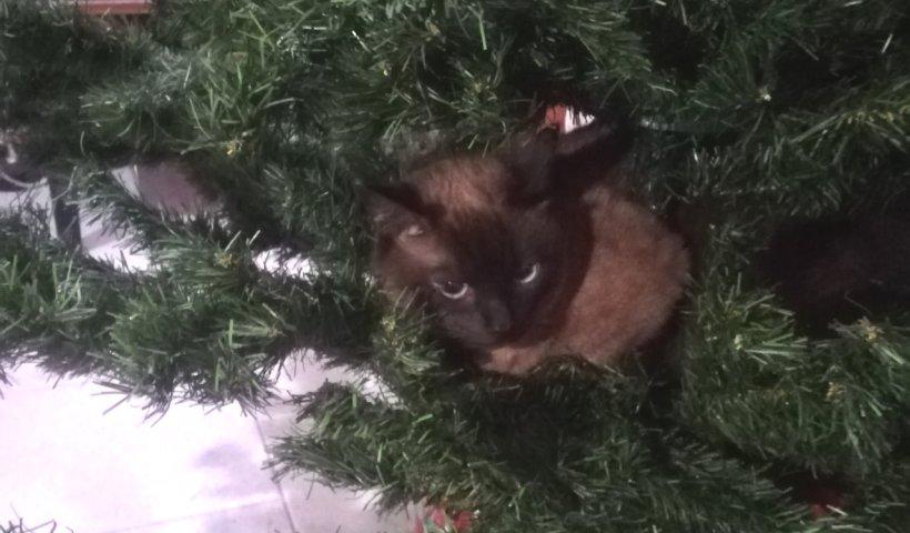 come ci vedono i gatti