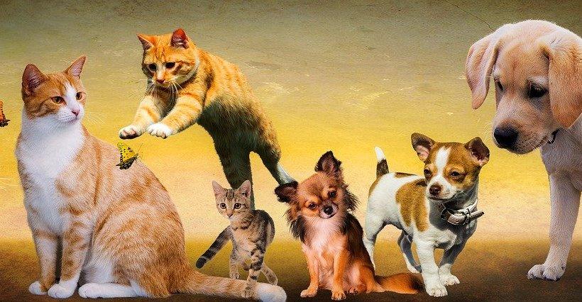 Intelligenza tra cane e gatto