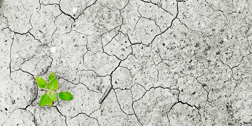 En la imagen se ve una planta naciendo en un sitio donde esnecesario el uso de energías renovables en España para la lucha contra el cambio climático