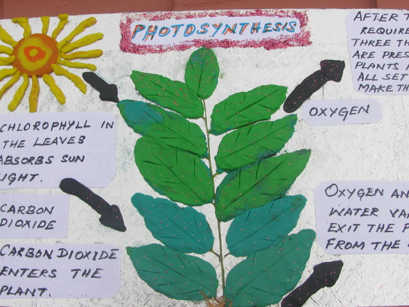 Photosynthesis In Plants Melindajanice Com