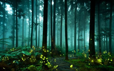 Fireflies – Flash Fiction