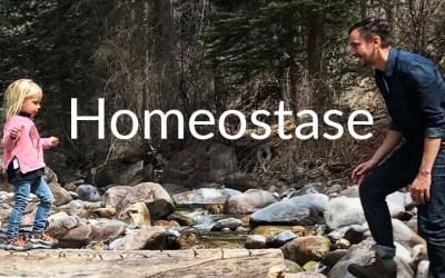 Wat is homeostase?