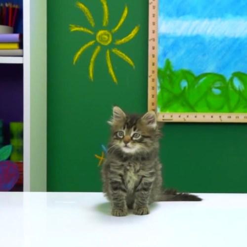 melissa-judson-cats-kids-react-set-design-friskies-fine-bros