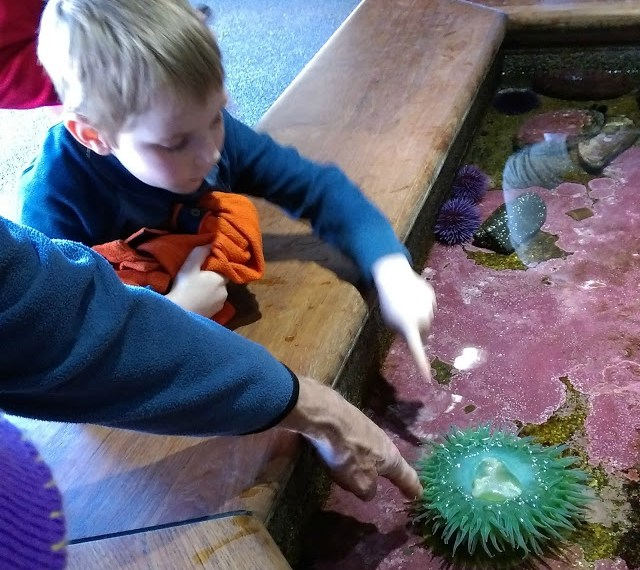 Melissa Kaylene's review of the Oregon Coast Aquarium