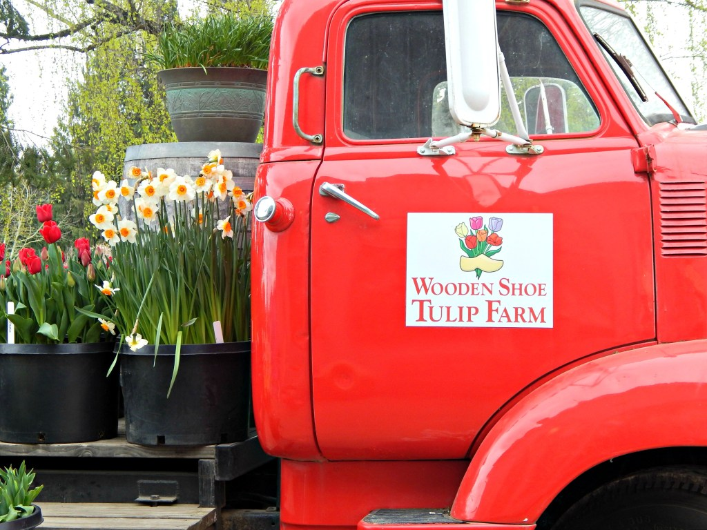 woodburn-tulip-festival-43