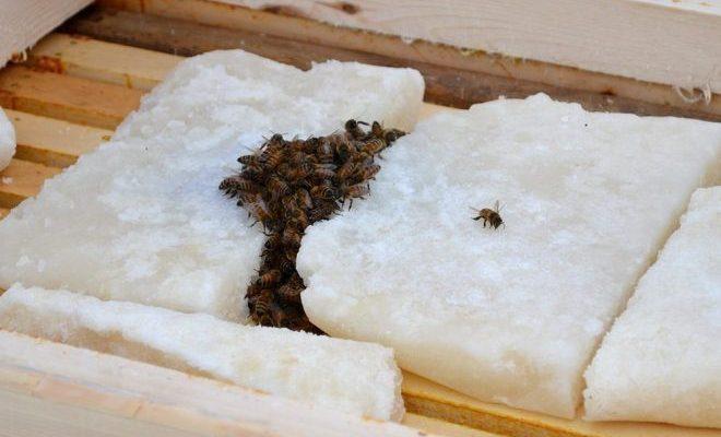 μελισσεσ