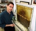 Μελέτη συνδέει τα δίκτυα ρύθμισης γονιδίων στον εγκέφαλο της μέλισσας με τη συμπεριφορά