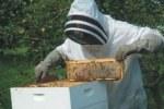 Πρόταση της ΠΑΣΕΓΕΣ για συμμετοχή σε πρόγραμμα μελισσοκομικού τομέα