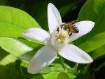 Ημερίδα: «Μελισσοκομία & Εσπεριδοειδή στην Κρήτη: μαζί για ένα κοινό μέλλον!»