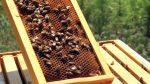 Ταχύρυθμα σεμινάρια μελισσοκομίας σε Πρέβεζα, Καστοριά, Σκύδρα