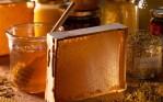 Σεμινάριο κατάρτισης μελισσοκόμων στον Πύργο