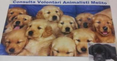 Consulta Volontari Animalisti Melito