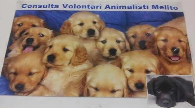 LA CONSULTA VOLONTARI ANIMALISTI MELITO, CONTENTA PER I RISULTATI OTTENUTI