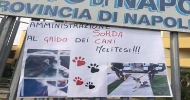 Melito - manifestazione consulta animalisti