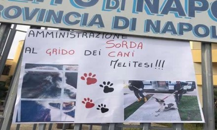 """Melito. Animalisti in rivolta contro l'ipotesi canile """"lager"""", il sindaco: """"Andate a lavorare"""""""