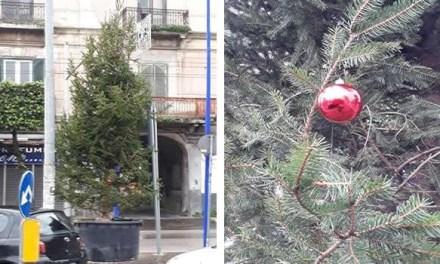 """Melito. """"Addobbiamo l'albero"""", iniziativa dei cittadini partita dal social"""