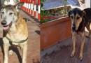 Melito - cani adottati
