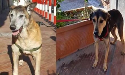 """Melito: le volontarie """"salvano"""" i 67 cani che si dovevano spostare in un altro canile"""