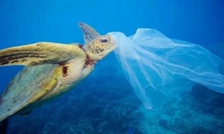 Plastic free. Via la plastica entro il 2021