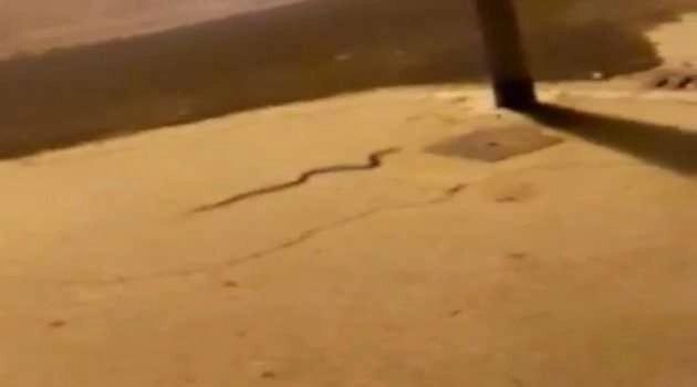 Melito. Allarme serpenti: è caos