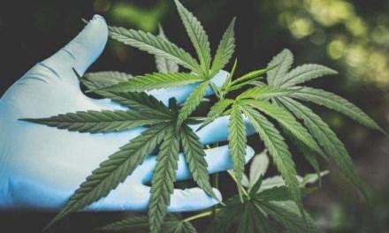 Coltiva marijuana, 28enne denunciato