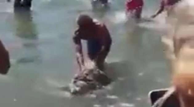 Lago Patria. Ritrovata una tartaruga di mare agonizzante