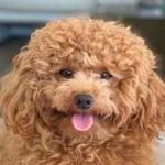 Tifosi napoletani smarriscono il cane: l'appello della SSC Napoli