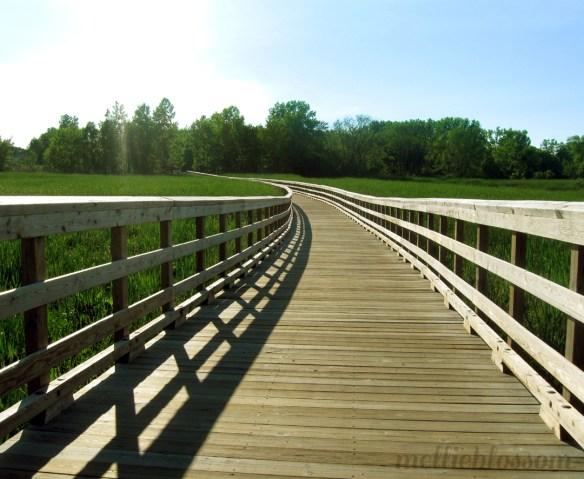 Dog Days of Summer - bridge