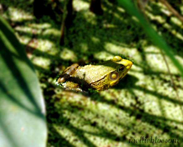 Dog Days of Summer - frog
