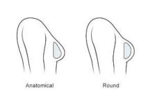 anatomiai-csepp-kerek-silimed