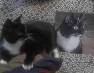 mstarkweather_gizmo and portrait