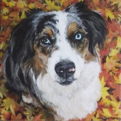 "Jakey, 2012, Australian Shepherd Portrait, Full Colour Acrylic Painting on Canvas, 12""x12"""
