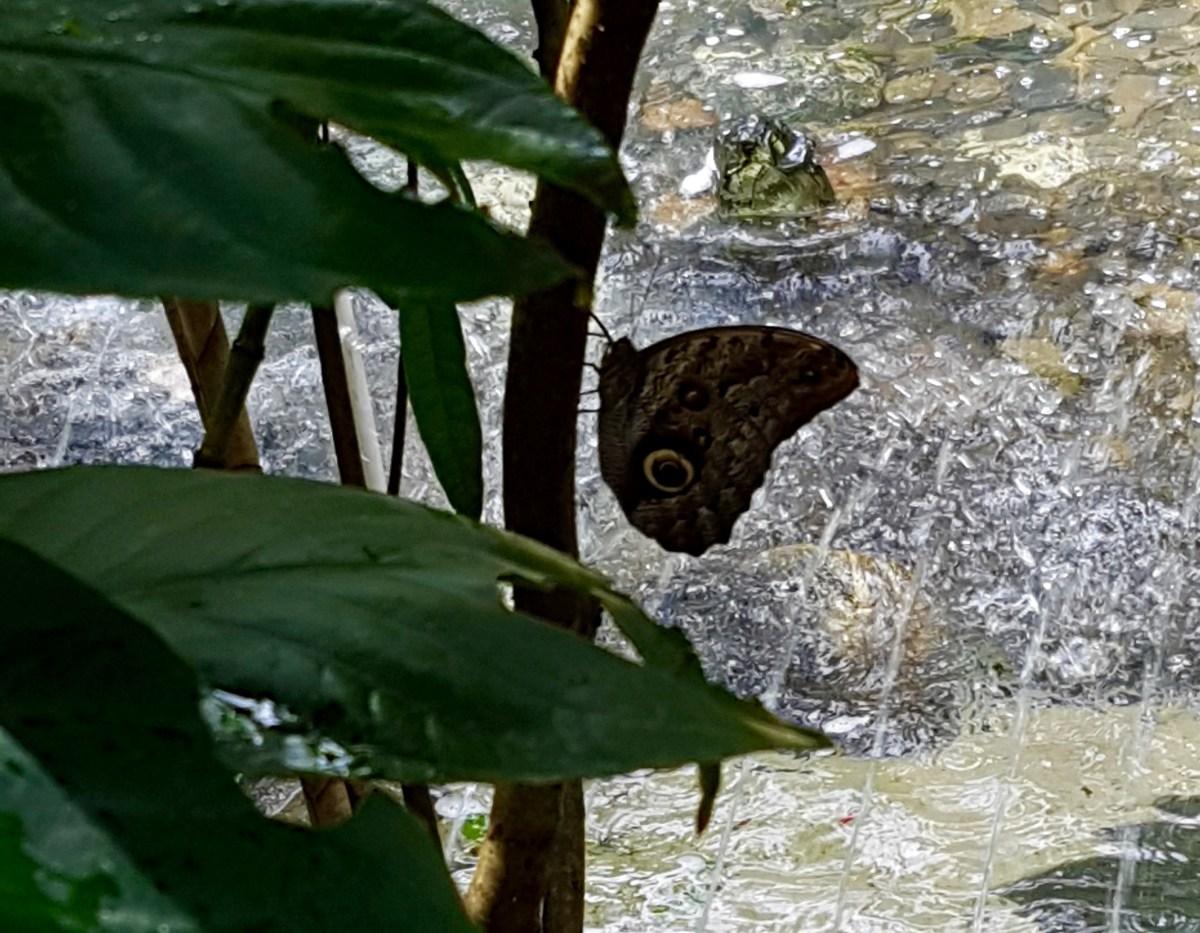 Outside in Medellin: Botanical Garden and Parque Explora