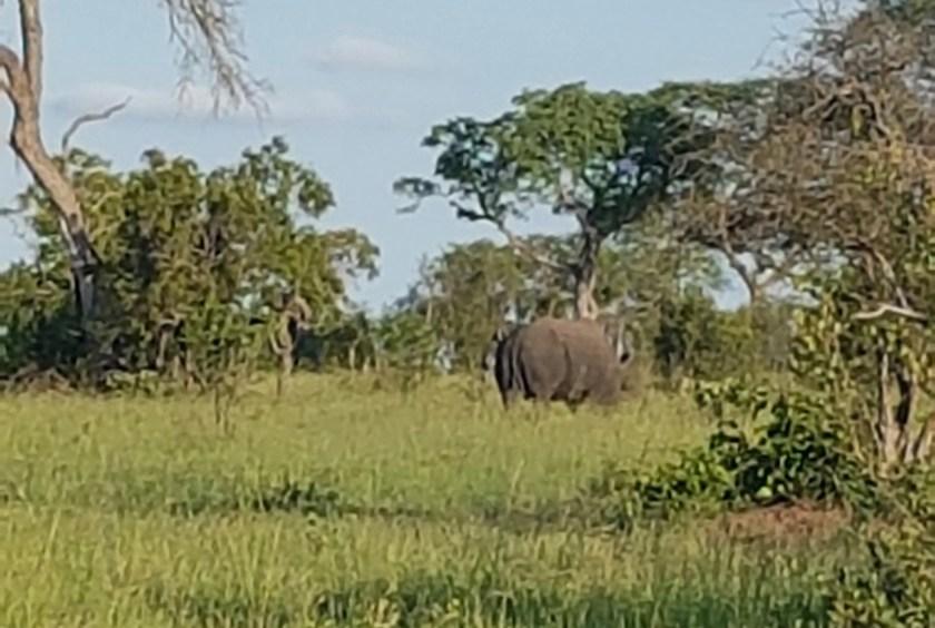 Rhino Skukuza Kruger
