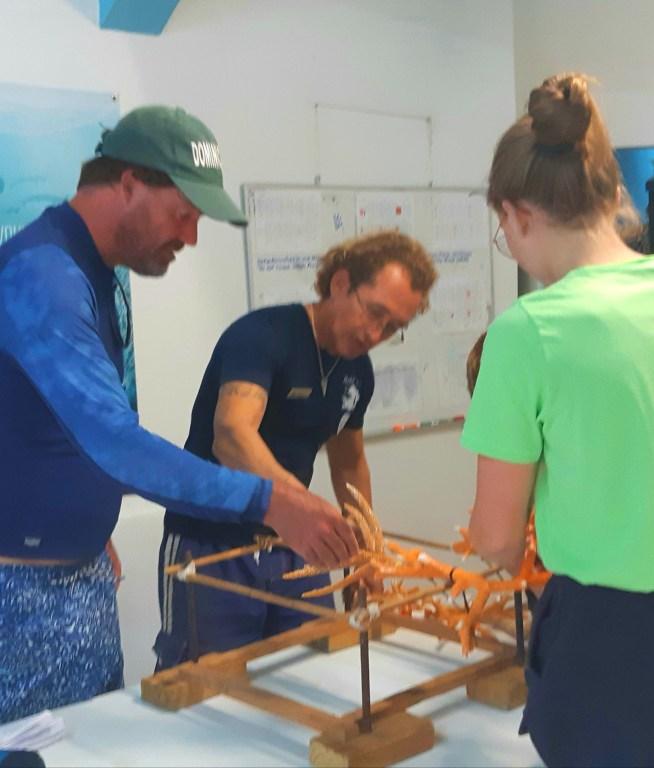 Reef Restoration in Bonaire