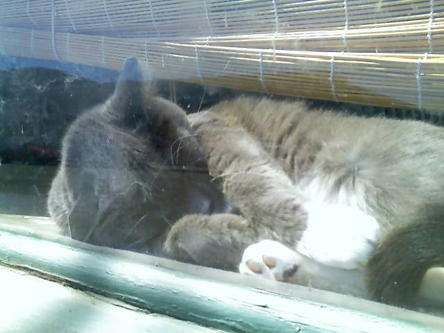 cat sleeping in a sunny window