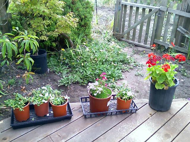 plants sitting on the deck